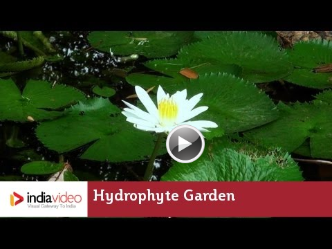 Hydrophyte Garden And Aquatic Plants Bioresources Nature