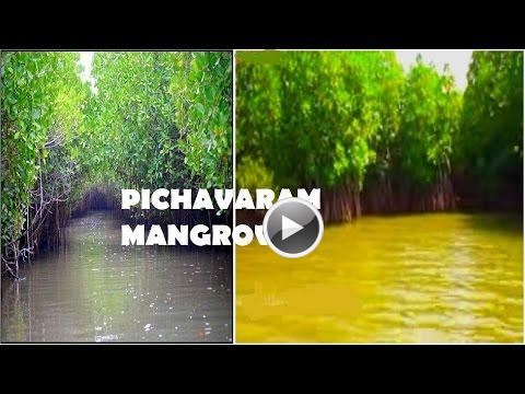 backwater chidambaram pondicherry chennai tamil nadu india video