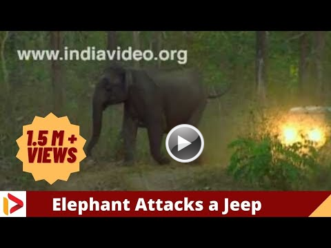 Elephant attack in kerala forest - photo#8